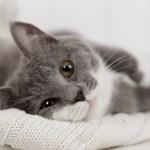 Kedilerin gizemli dünyasına dair bilimsel gerçekler