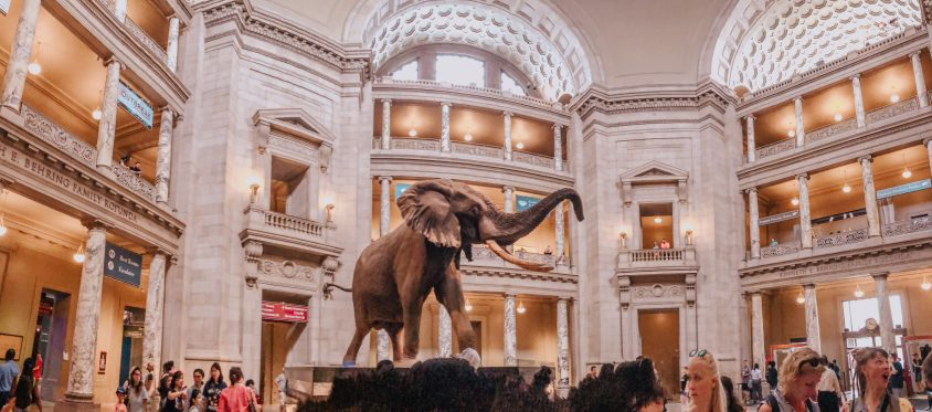 Many of the museums you'll visit in this 2 day Washington DC itinerary will have free admission - including the Smithsonian National Museum of Natural History