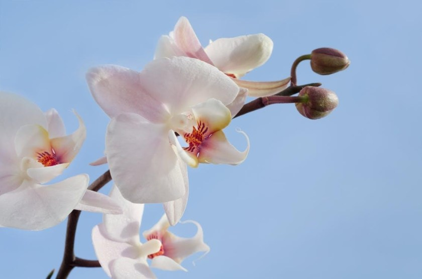 Give Them Enough Sun orchid care