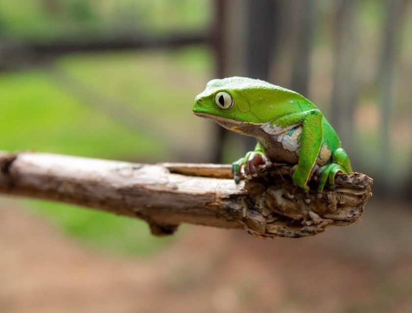 How to Keep Them Happy tree green frog