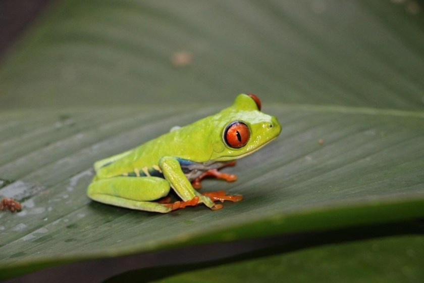 Tips to Keep Them Healthy tree frog red