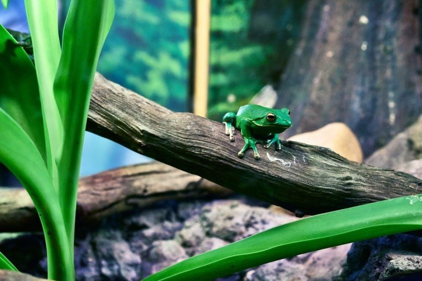 water for tree green frog care green habitat