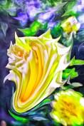 roseliquid2