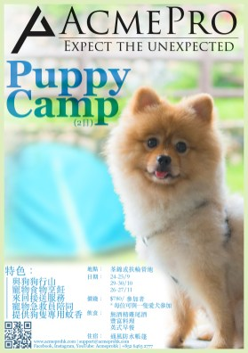 Puppy Camp (Chi)