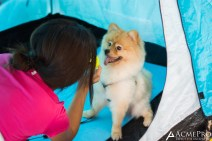 Puppy Camp