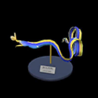 ハナヒゲウツボ 模型