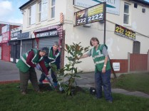 Planting an evergreen Magnolia on the corner of Woodcock Lane.