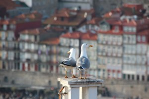 gulls on a rooftop