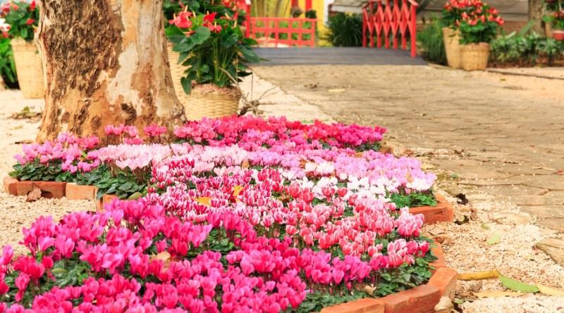 A Expoflora, maior exposição de flores e de plantas da América Latina, acontece de 24 de agosto a 23 de setembro em Holambra
