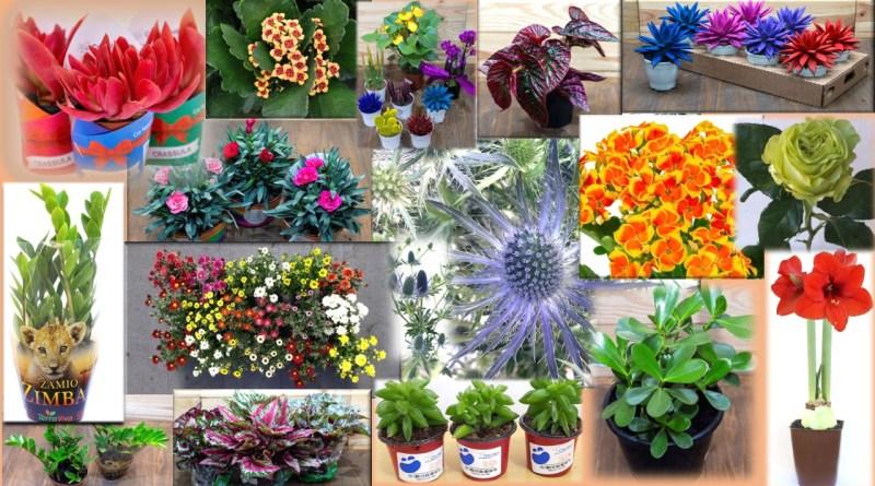 Novidades em flores e plantas estão prontas para dar às boas-vindas à Primavera