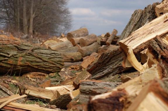 Firewood_44