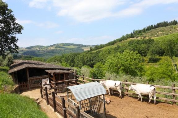 Fontodi_Tuscany_17