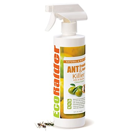 8. EcoRaider ant killer and crawling insect killer.
