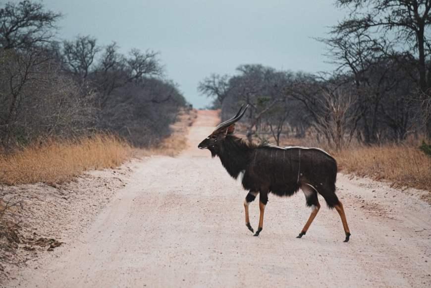safari na africa dos sul savana
