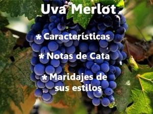 Merlot. Características, cata y maridajes