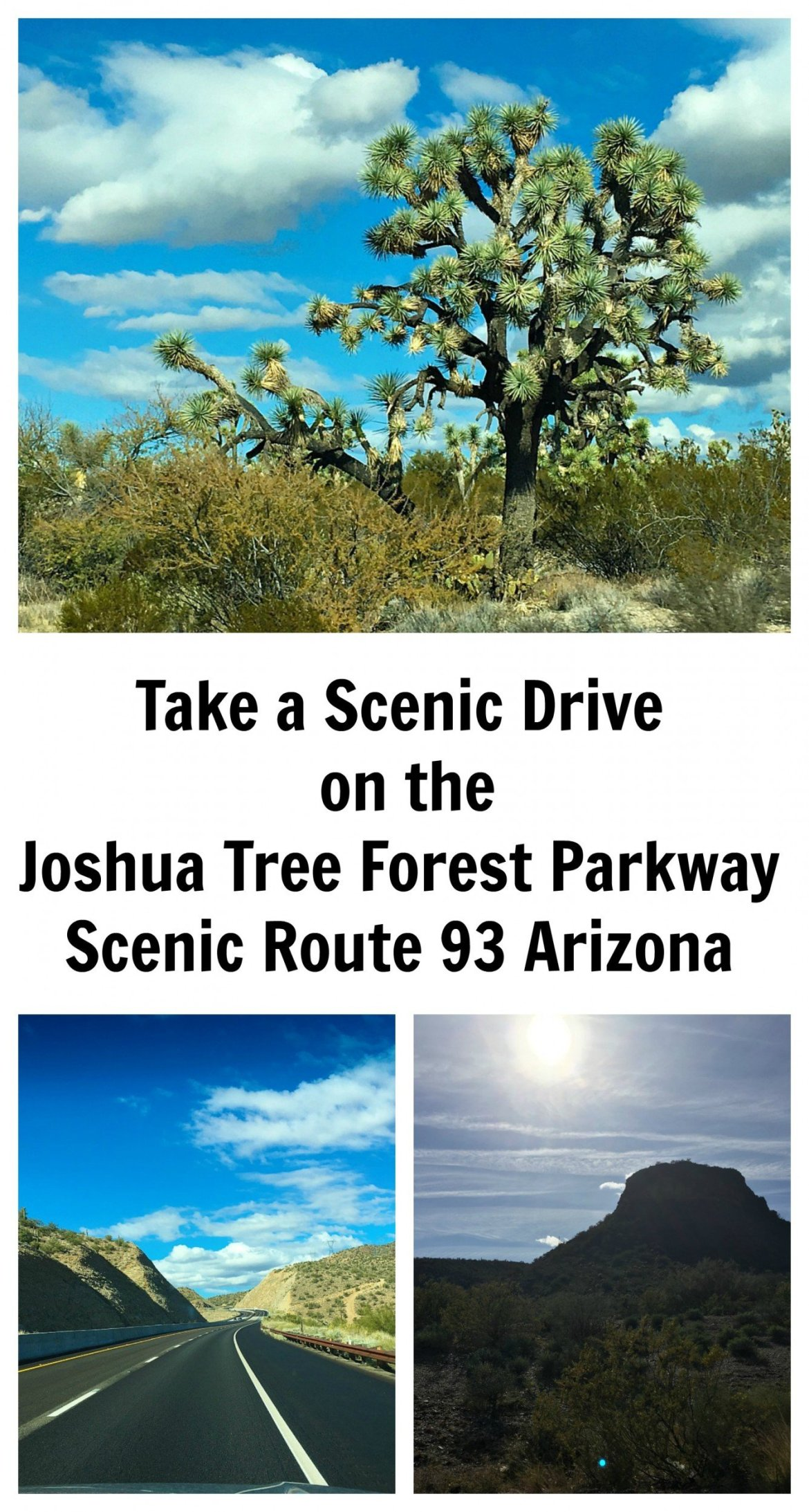 Take a drive on one of the most beautiful scenic drives in Arizona, along the Joshua Tree Forest Parkway, Scenic Route 93
