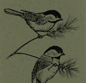 Black-capped Chickadee Bookmark
