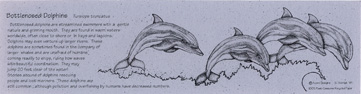 Bottlenosed Dolphins Bookmark