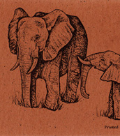 African Elephant  Bookmark