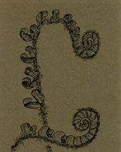 Fiddleheads of Christmas Fern Bookmark