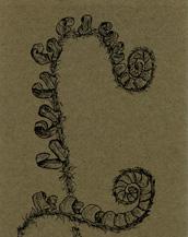 Fiddleheads of Christmas Fern Bookmark
