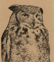Great Horned Owl Bookmark