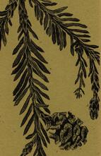 Redwood Branch