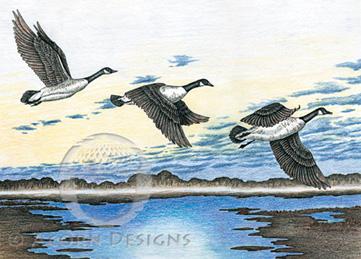 Canada Geese Notecard