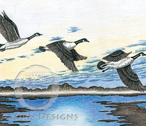 Canada Geese Notecard
