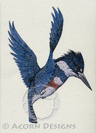 Belted Kingfisher Notecard