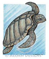 Atlantic Ridley Sea Turtle Lokta Card