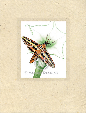 Sphinx Moth Lokta Card