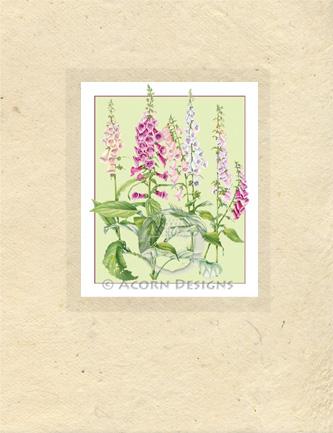 Foxgloves Lokta Card