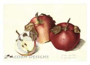 Two-and-a-Half Apples Notecard