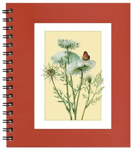 Queen Anne's Lace Notecard