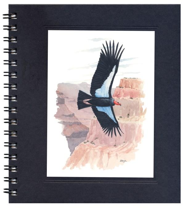 California Condor Notecard