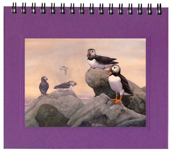 Atlantic Puffin Notecard