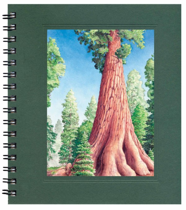 Giant Sequoia Note Card