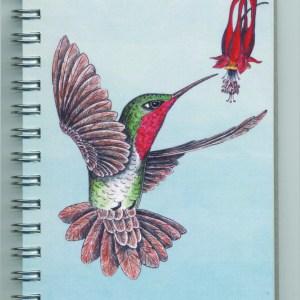 Cover image - Ruby-throated Hummingbird Mini Journal