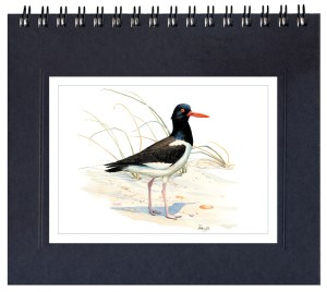 Oystercatcher Notecard