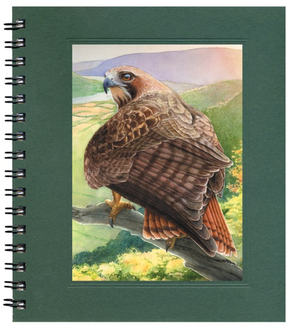 Red-tailed Hawk Notecard