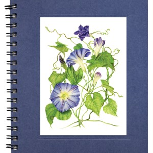 Morning Glory Notecard