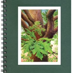 White Oak Notecard