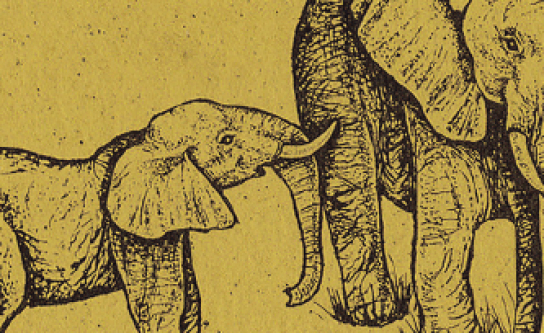 Elephant_Banner_Animals