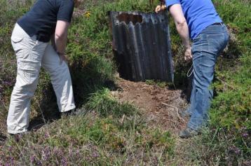 reptile survey, ecology courses