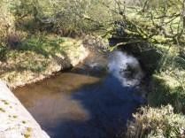 Tamar at Crowford bridge