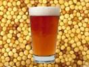 seed+beer