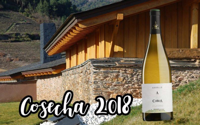 Godello, Comprar, Online, A Coroa, Valdeorras, Vino