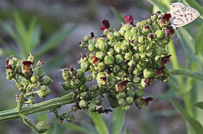 Las plantas curan sin provocar síntomas indeseables