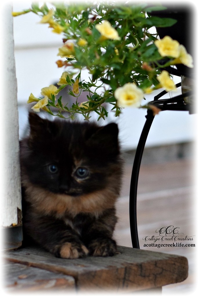 Cats of Cottage Creek Galleries